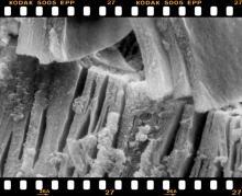 zeolit ásványok
